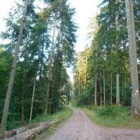 Route forestière de Soultzbach